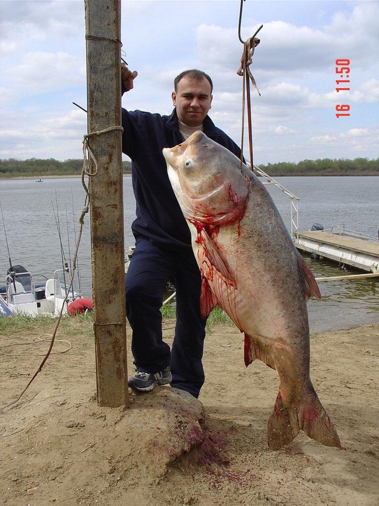 рыболовная база толстолобика
